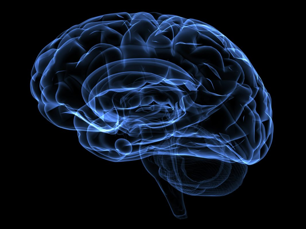http://www.dreamstime.com/stock-images-brain-image1550394