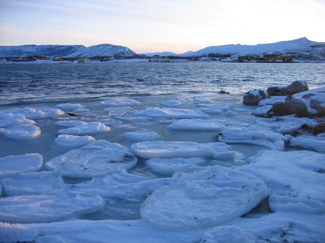 Adapting to a changing Arctic environment