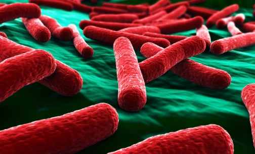 Understanding microbial pathogenicity requires holistic analyses