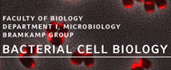 bacterial cell biology